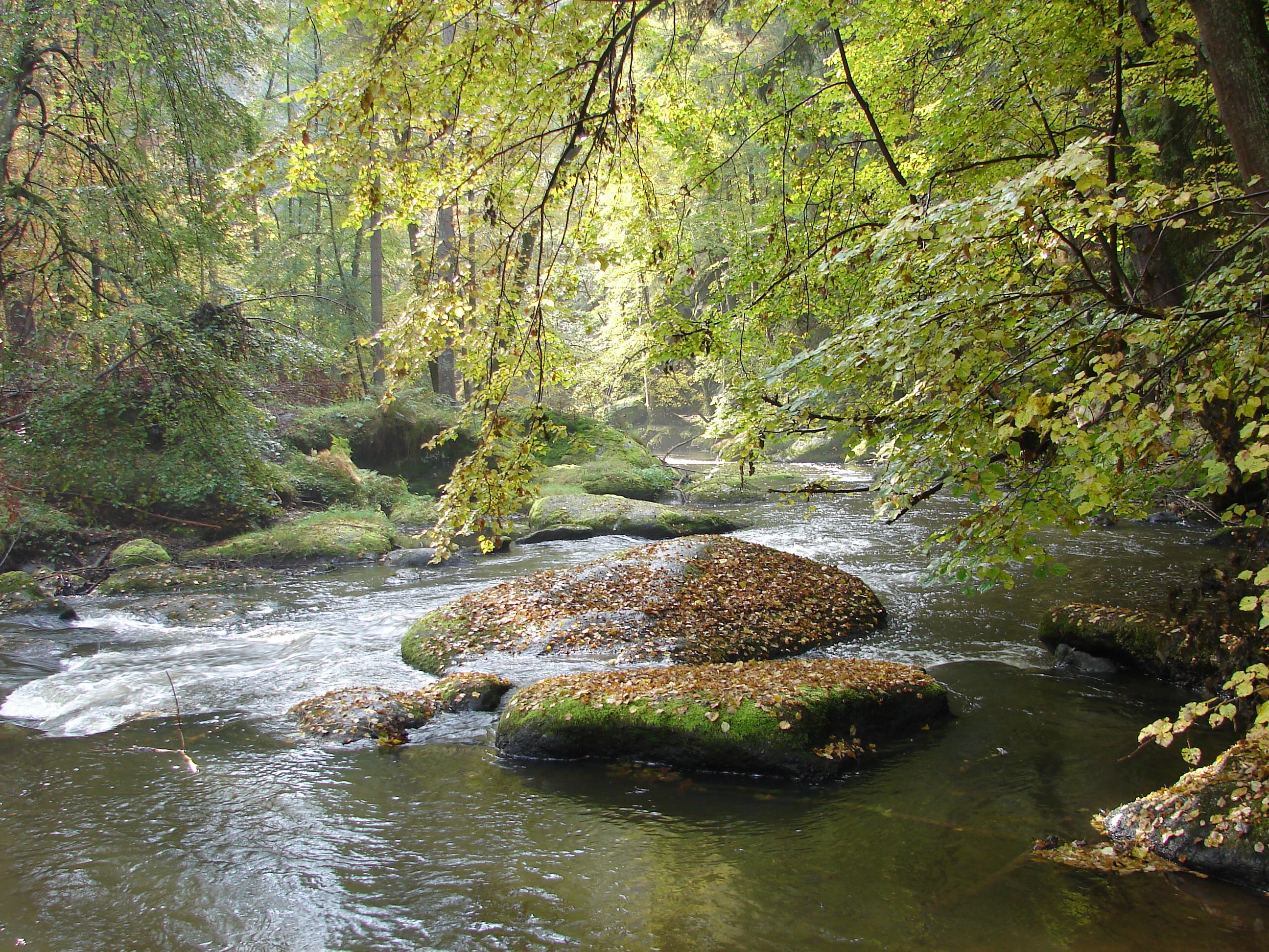 Bilder Mädler in Trautenberg 092